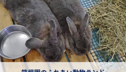 【体験談】箱根園のふれあい動物ランドだっこして!ZOO!は雨でも楽しい
